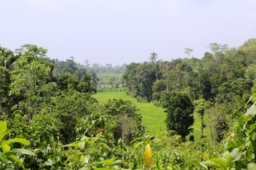 Elevated land overlooking rice paddy