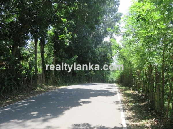 170 Perches Land In Midigama