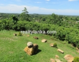 BI 72 - Cinnamon Plantation With A Stunning View