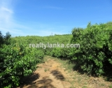 BI 73 - 100 Acres Mix Plantation