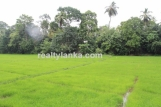 GI 147 - Lush Land with Paddy View